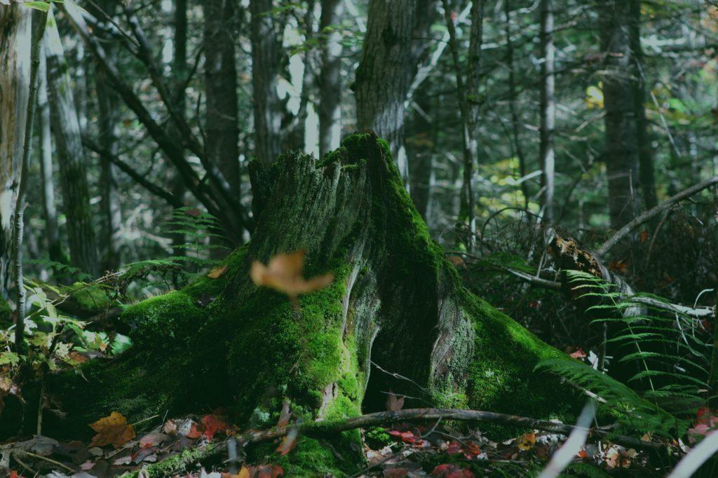 przewrócone-drzewo